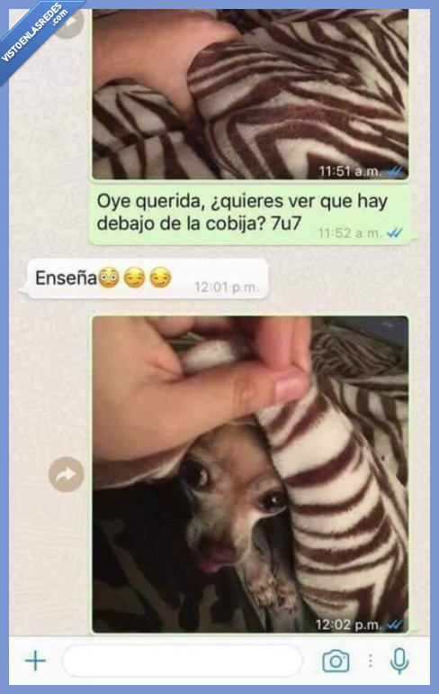 historia,perro,whatsapp