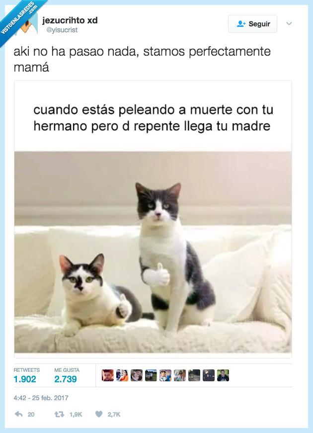 gato,hermanos,hostia,pelea