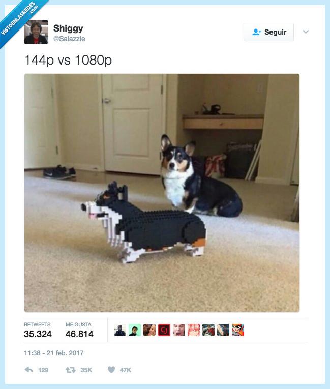 descargar,hd,lego,perro