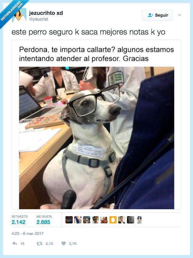 atender,clase,perro