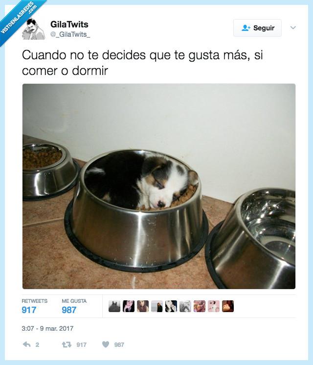 comer,dormir,perro,pienso