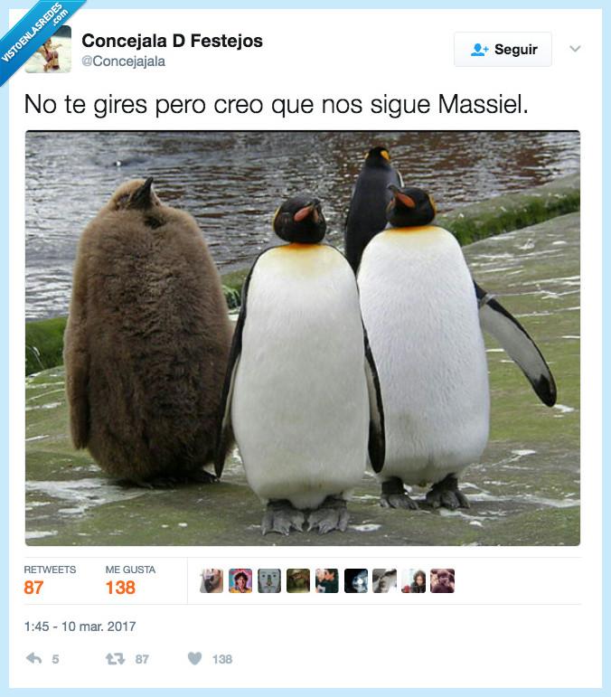 masiel,pingüino,seguir