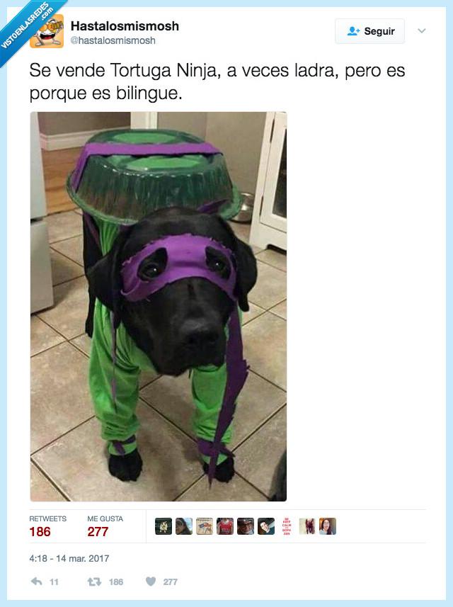 llamar,ninja,perro,tortuga