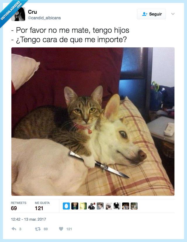 asesino,gato,instinto,sacar