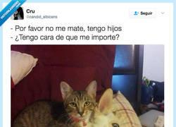 Enlace a Cuando el gato saca su instinto asesino por @candid_albicans