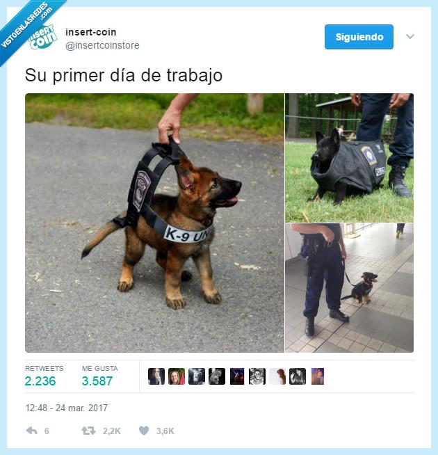 cachorros,perritos,perros,policía