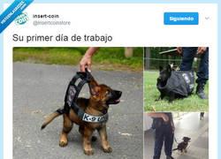 Enlace a No me importaría ser arrestado por estos perros policía por @insertcoinstore
