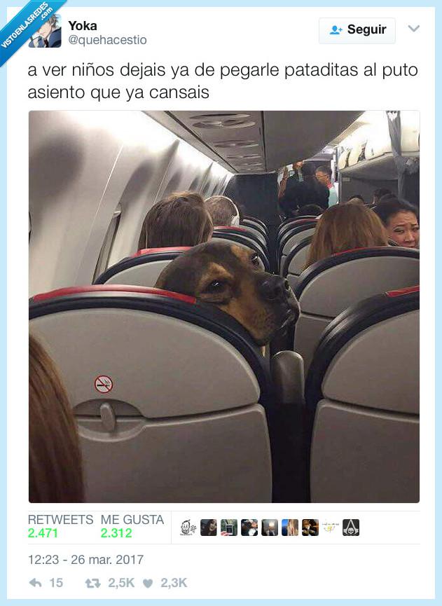 avión,patada,perro,sillón