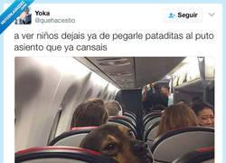 Enlace a El perro solo quiere disfrutar de su viaje por @quehacestio
