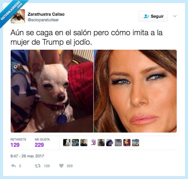 melania trump,mujer,perro