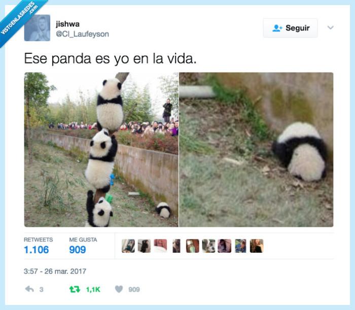 panda,vida