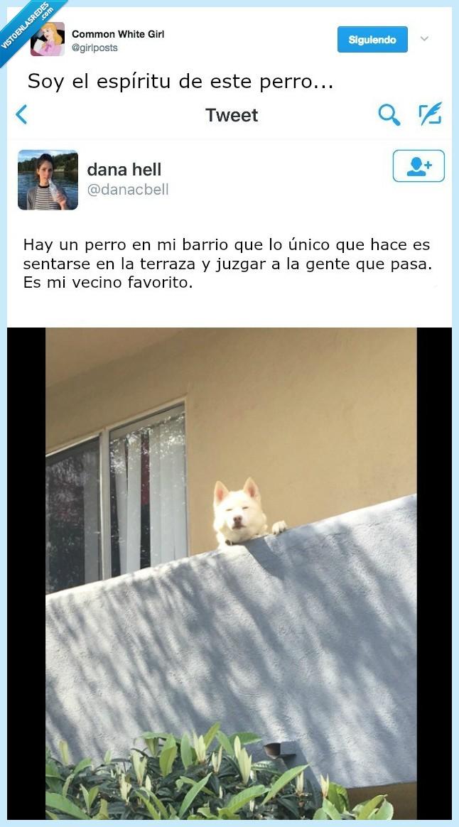 barrio,perro,posición,unico