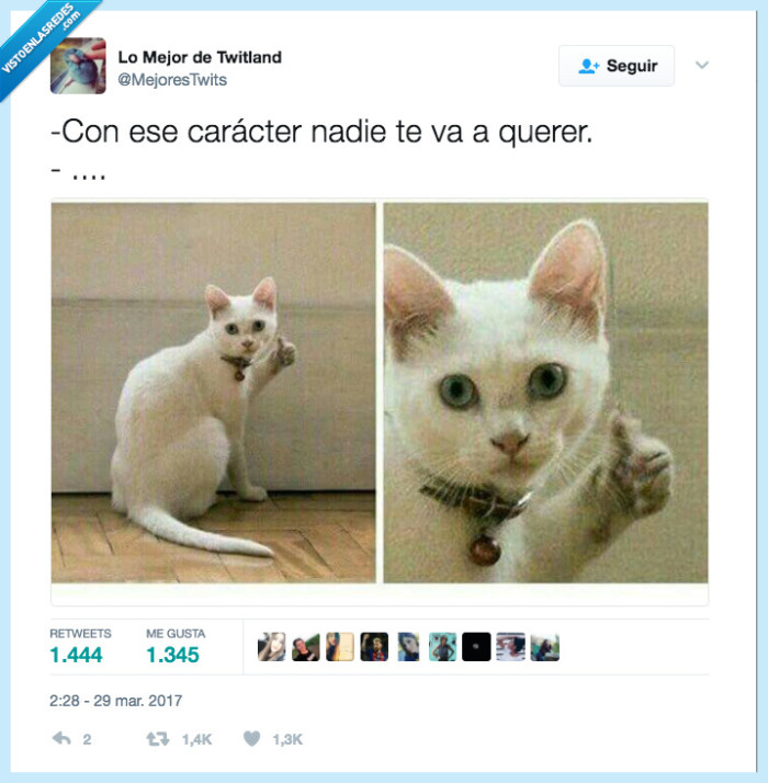 carácter,gato,nadie,querer