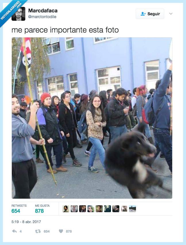 famoso,perro,salir