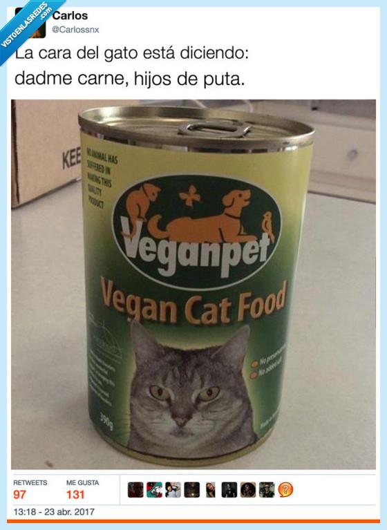 carne,comida vegana,gato