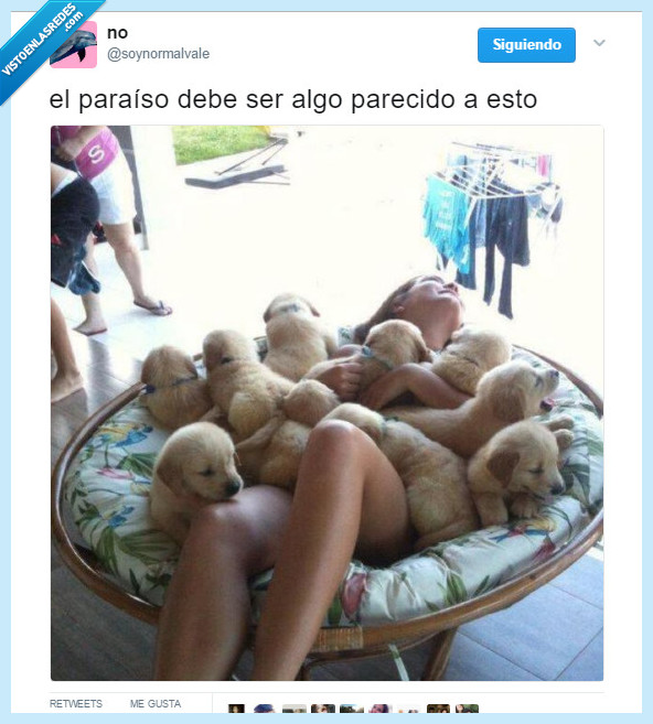 cachorro,cielo,morir,perro
