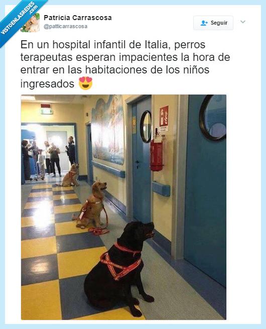 hospital,Italia,perro