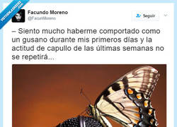 Enlace a Hasta las mariposas hacen declaraciones, por @facunmoreno