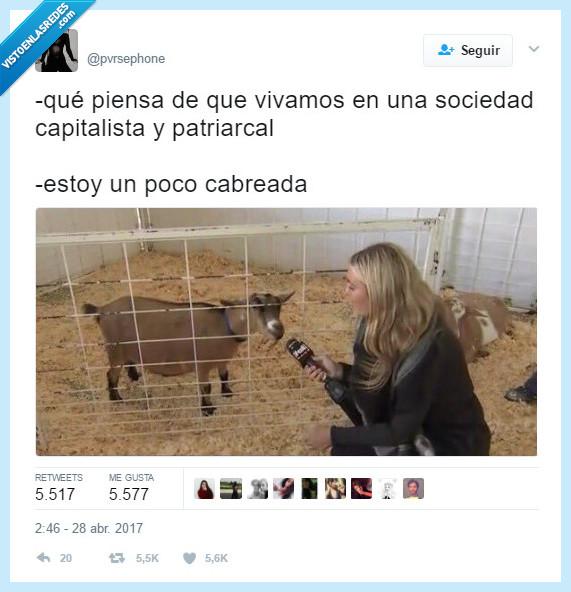 cabra,cabrear,sociedad