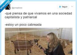 Enlace a Ea, Ea la cabra se cabrea, por @pvrsephone