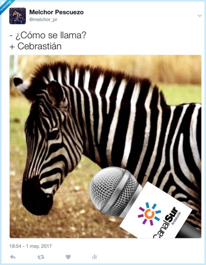 Cebra,Cebrastian,Entrevista