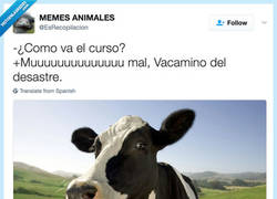 Enlace a Vacamino de hacerse cansino esto de los animales, por @EsRecopilacion