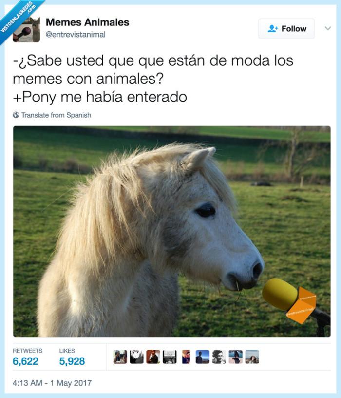 animales,pony