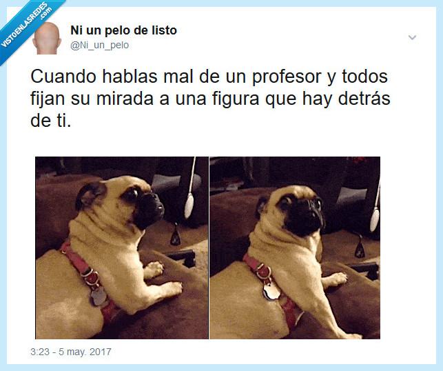 hablar,mal,perro,profesor