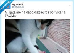 Enlace a El gato sobornador, por @DoktorBarbass
