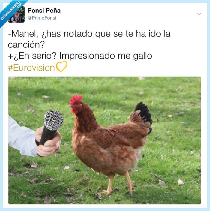 animales,españa,eurovision,gallo,gallovisión,Manel,spain