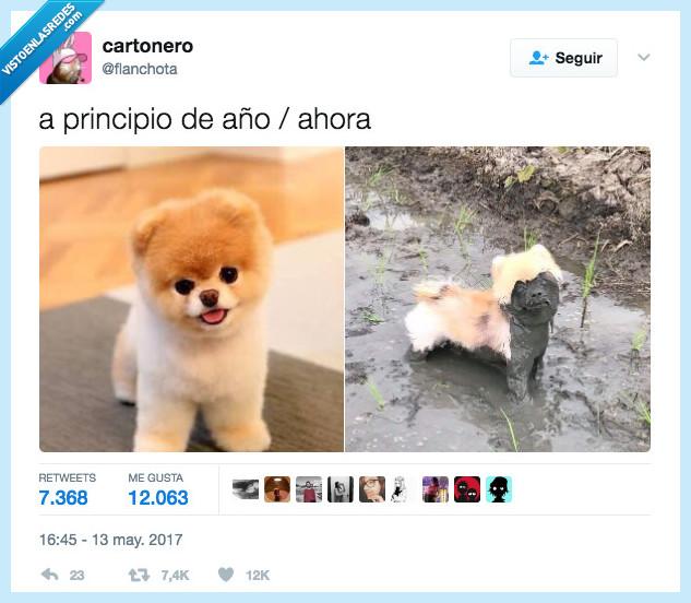 2017,perro