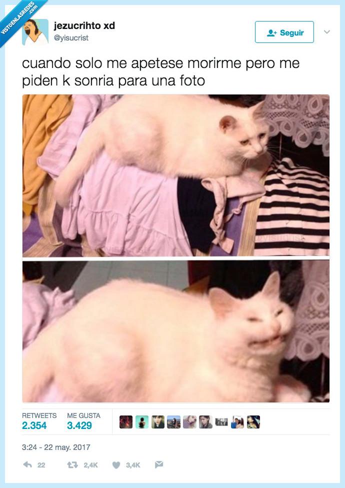gato,haber,morir