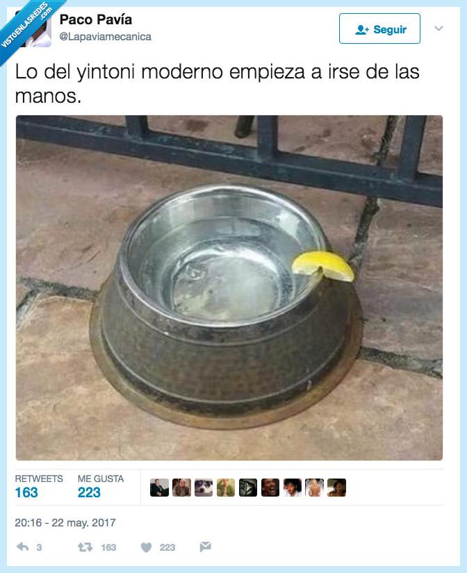 gin tonic,mano,moderno