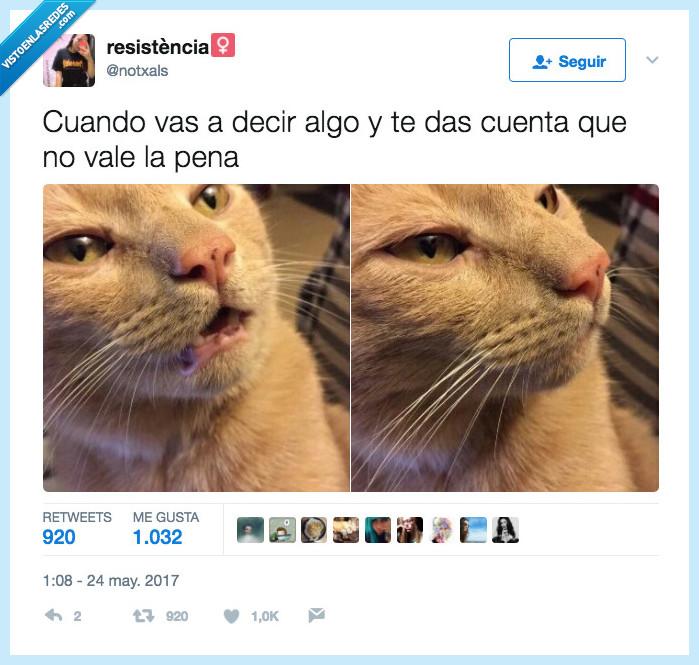decir,gato,pena,valer