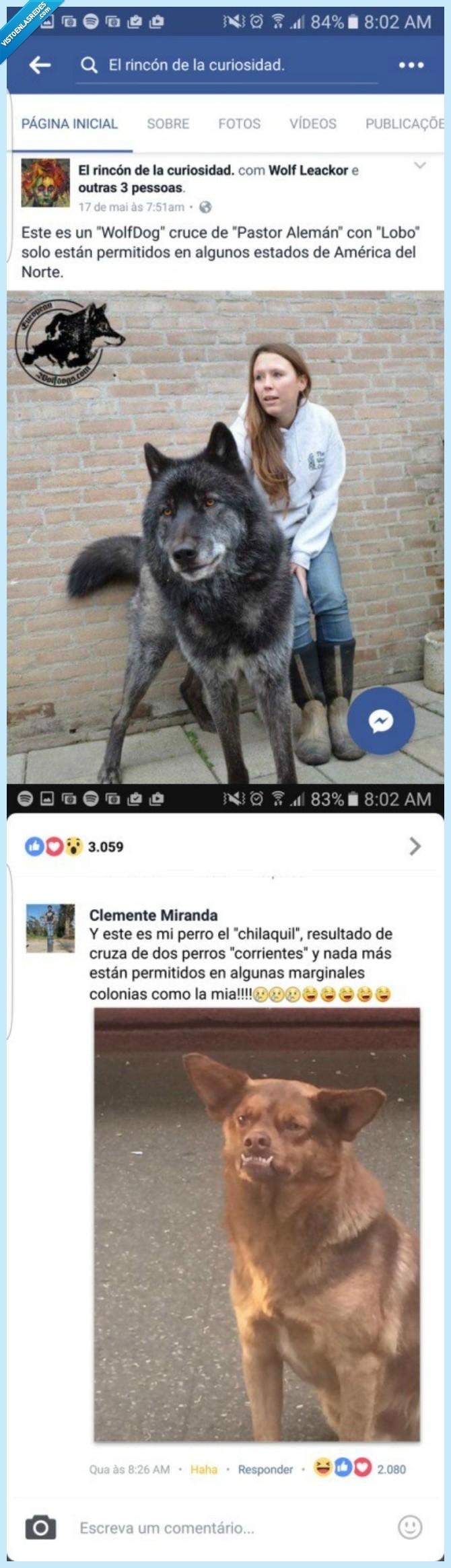 chilaquil,feo,perro