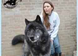 Enlace a Comparan a uno de los perros más impresionantes del mundo con