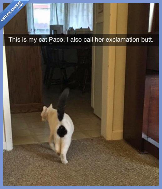 gato,señal,trasero
