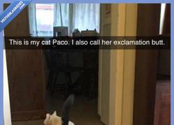 Enlace a Cuando el trasero de tu gato te manda señales