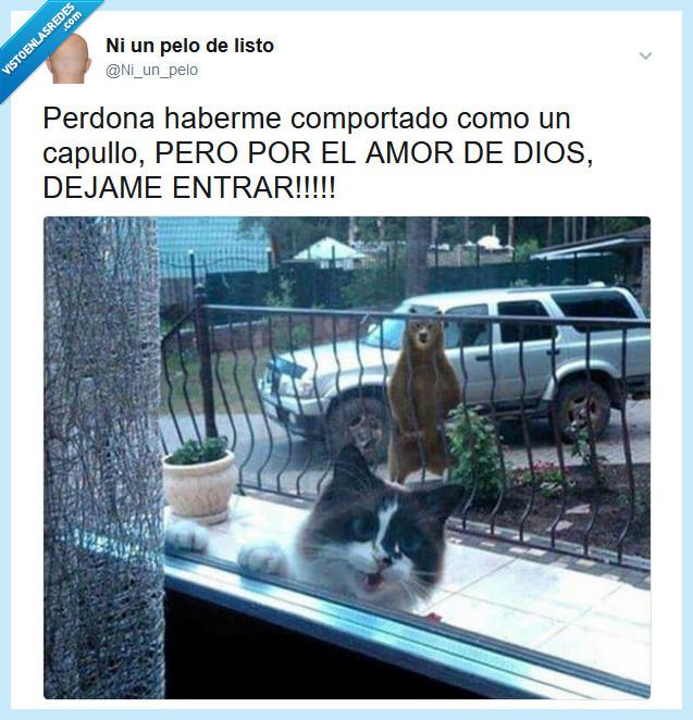 capullo,entrar,gato,oso
