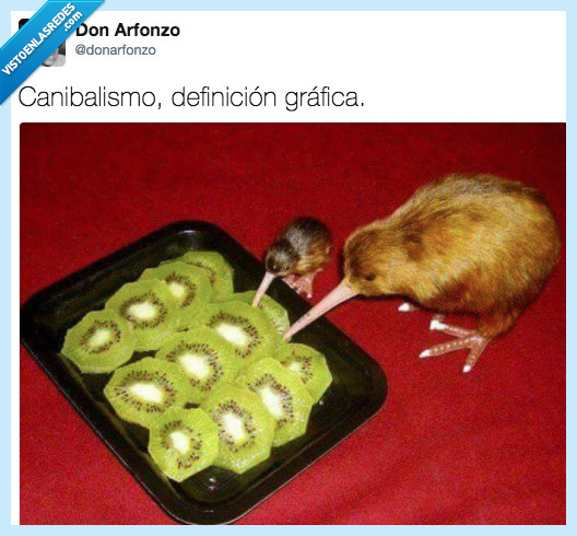 canibal,definición,kiwi