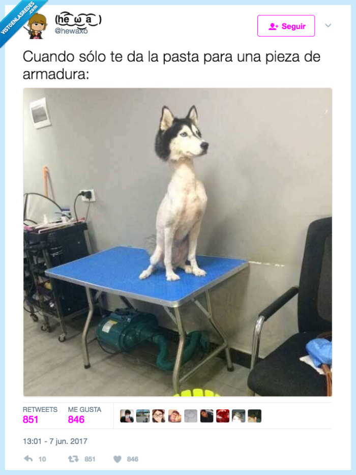 afeitar,armadura,cabeza,juego,perro
