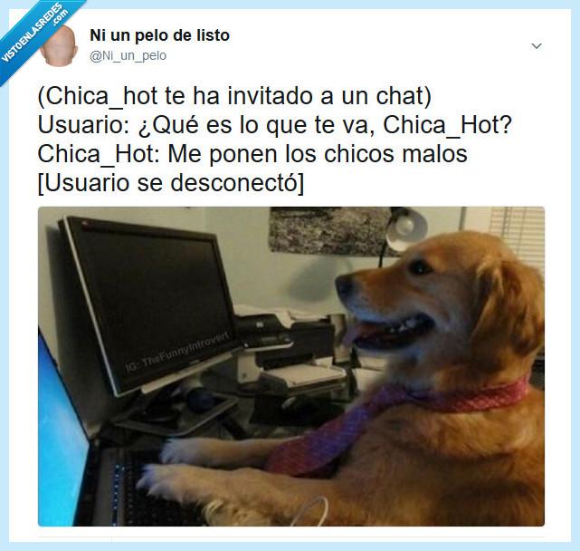 buen,chat,chico,malo,perro