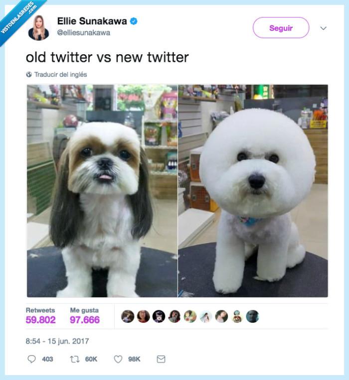 pelo,perro,redondo