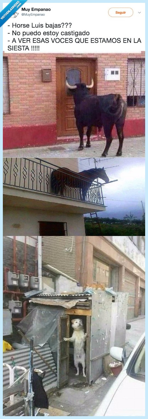 Absurdo,horse luis,meme,perro