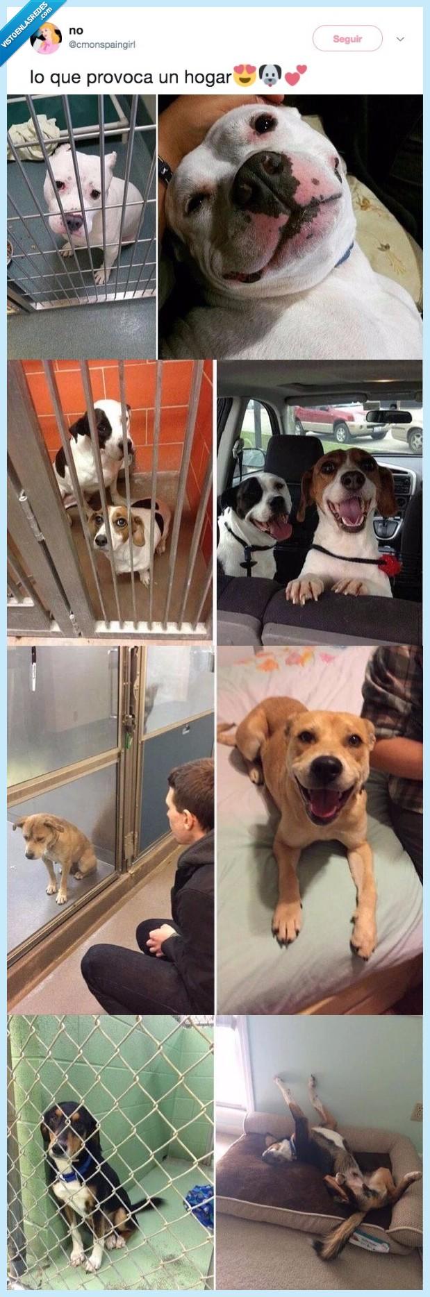 adoptar,perro,siempre