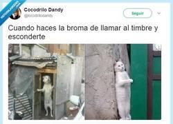 Enlace a El juego del gato y el ratón, por @locodrilodandy
