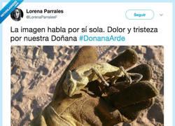 Enlace a Doñana Arde, por @LorenaParralesF