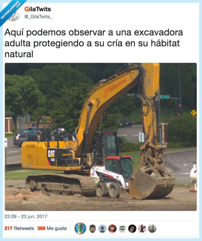 excavadora,habitat,proteger