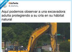 Enlace a Excavadoras: especies protegidas, por @_gilatwits_