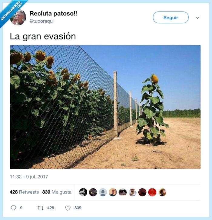 arbusto,evasión,rejas